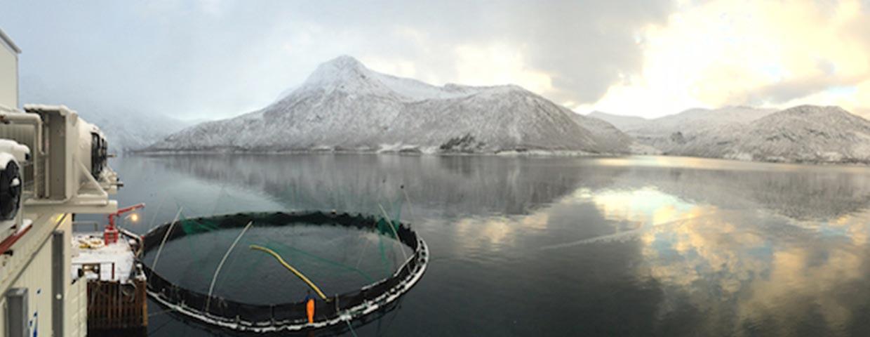 Wilsgård Fiskeoppdrett